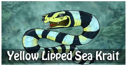 Yellow Lipped Sea Krait