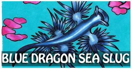 Blue Dragon Sea Slug