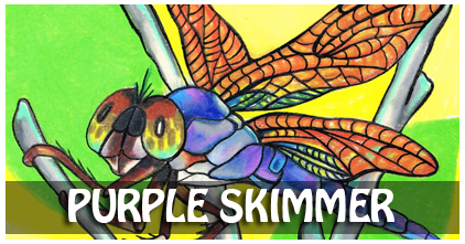 Purple Skimmer