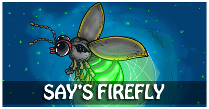 Say's Firefly